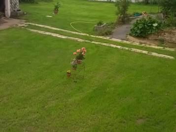 Semis de pelouse – après